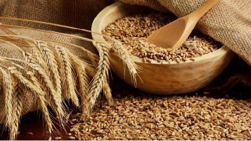 Аграрні асоціації просять Гройсмана та Мін'юст посприяти відновленню нормальної торгівлі зерном