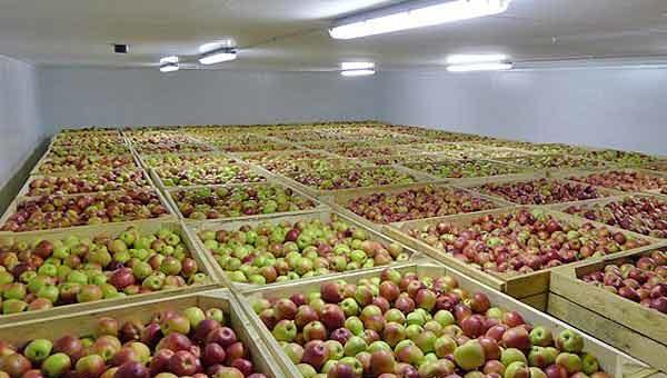 Строительство хранилища фруктов окупится за 3-4 года