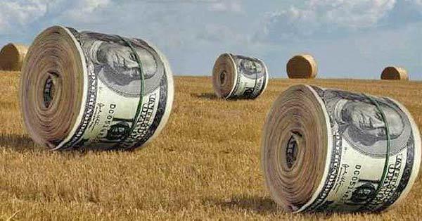 Всемирный банк готов инвестировать в украинский АПК