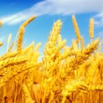 Продам действующие сельское хозяйство 9980га в центральной части Украины