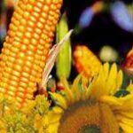 Продам сельхозпредприятие в Полтавской области — 705 га Лубни
