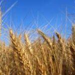 Продам сельхозпредприятие 12000га в Житомирской области Новоград-Волынский р-н