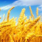 Продам сельхозпредприятие в Волынской- Ровенской области — 5000 га