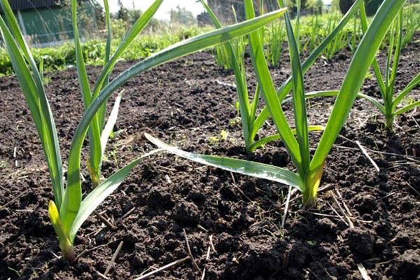 Анализ почвы и растений