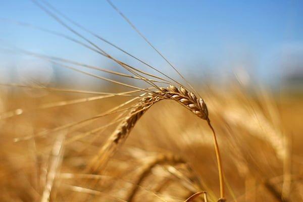 Экспорт зерна превысил 34 млн т