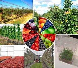 Нове промислове садівництво