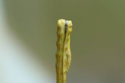 потери урожая рапса