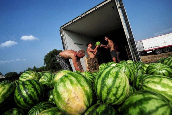 Поляки перепродают украинские арбузы