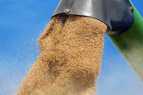 Украина экспортировала полмиллиона тонн зерна