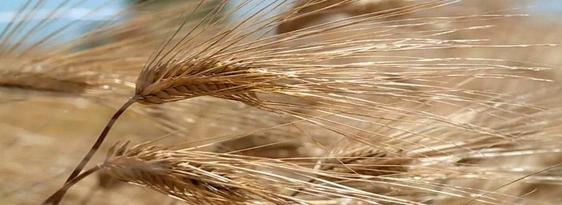 Форум зернопереработчиков-2018