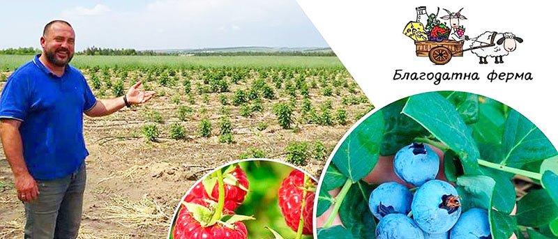 Особливості вирощування лохини та органічної малини