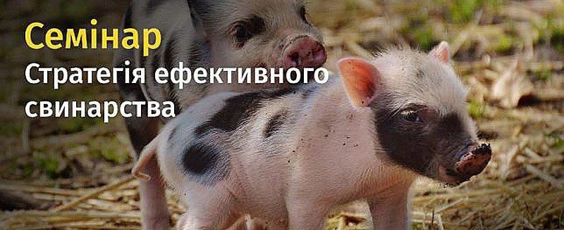 Стратегия эффективного свиноводства 2018