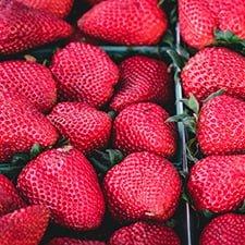 Промышленное ягодоводство — 2018: Успешные технологии