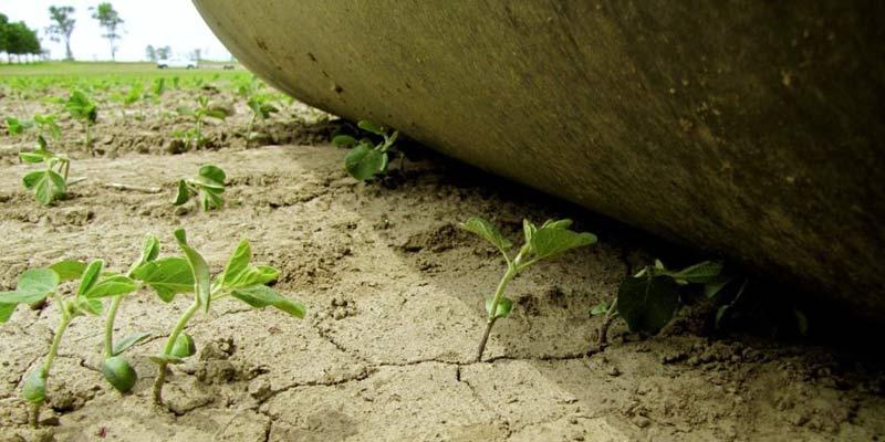 При наявності натхнення, вільного часу та міцного здоров'я поле можна очистити від великих каменюк. Але дрібні камінці залишаються, а для комбайна вони є не «камінчиком в черевику», а «піском в очах»