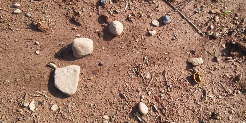 Щоб уникнути зрідження посівів, коткування на важких ґрунтах проводять не після посіву, а після появи сходів
