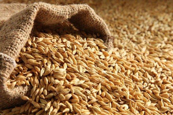 обробки зерна
