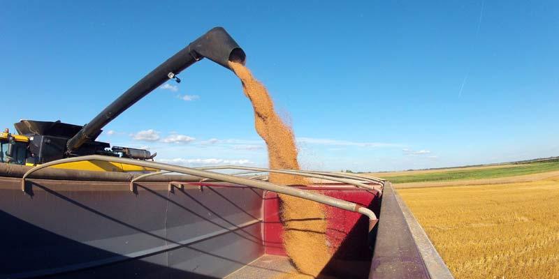 Ціни на зерно