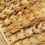 Куплю зерновые. Зерновые продать.